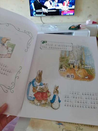 百年传世绘本 彼得兔父与子等经典故事 注音版(5套装 共42册) 晒单图