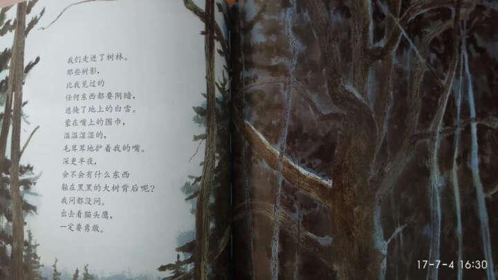 美国凯迪克金奖作品《月下看猫头鹰(精)》信谊绘本 儿童编辑:彭懿推荐 一首冬日月光下的短歌 晒单图