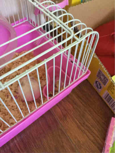 艾妮斯Alice 仓鼠粮主粮 美毛多种配方豪华饲料 仓鼠食物零食用品 450g ae135 美毛试吃装(赠品请勿购买约25g) 晒单图