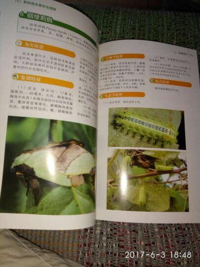 梨树病虫害防治图解 晒单图