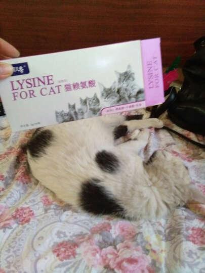 【2件7.5折】宠儿香猫赖氨酸30袋装猫鼻支猫胺猫安猫安粉猫咪牛磺酸猫用赖氨酸粉 猫赖氨酸 晒单图