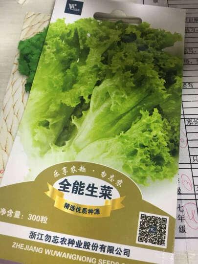 勿忘农浙甜2088玉米种子四季蔬菜阳台庭院种植30粒/袋 晒单图