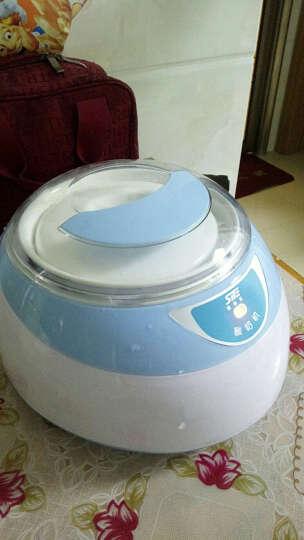 思奈尔(SITE)机械版酸奶机家用全自动陶瓷内胆杯酸奶机 蓝色款 晒单图