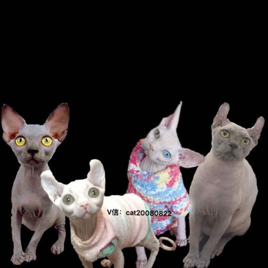 美滋元 宠物除臭豆腐猫砂6L 晒单图