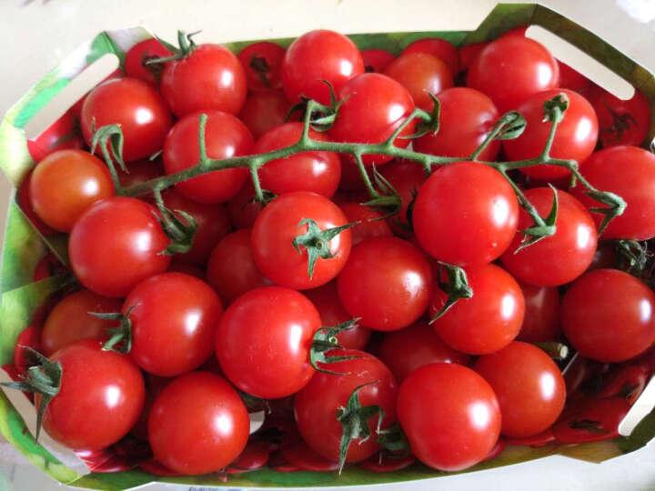 小汤山 原味番茄(红圆) 约500g 新鲜蔬菜 晒单图