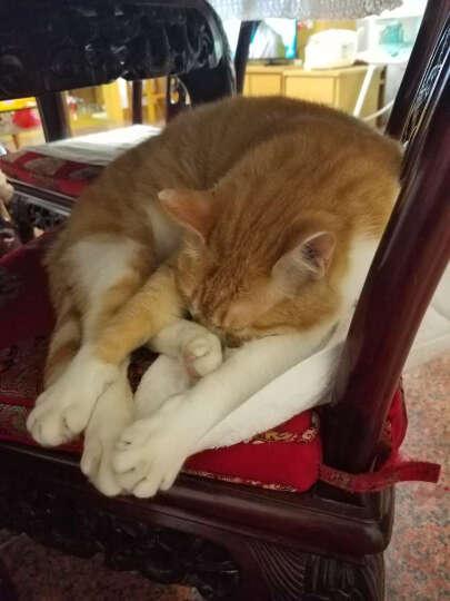 澳路雪猫香波 除虫赛级猫用沐浴露400ml猫浴液 晒单图