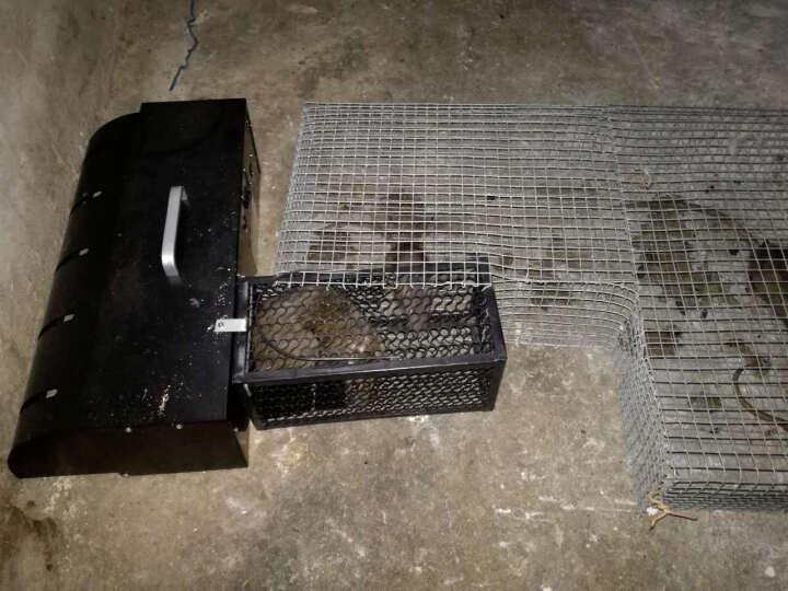 闪电连续捕鼠器电子捕鼠器红外感应全自动捕鼠机器人老鼠笼夹 黑色 晒单图
