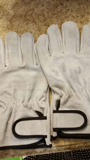 虹越(HONGYUE) 虹越园艺家 月季防刺园艺手套 牛二层皮 柔软舒适 防滑耐用 XL 晒单图