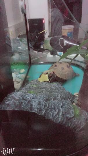 鱼龟混养缸养乌龟专用缸大乌龟缸带晒台玻璃水陆缸养龟缸中型别墅 套餐三生态版 晒单图