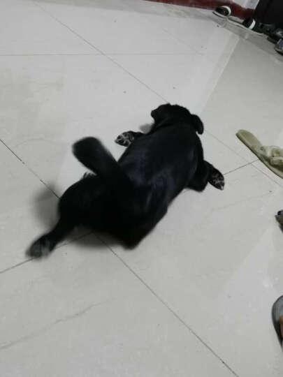【E宠】小宠 肠胃宝猫用复合益生菌调肠胃单包装5克/包 晒单图
