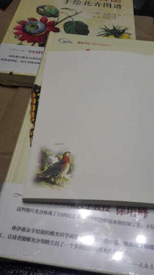博物学经典手绘图谱:自然界的艺术形态+休伊森手绘蝶类图谱+布洛赫手绘鱼类图谱+雷杜德手绘花卉图谱 (套装共4册 附赠精美手账) 晒单图