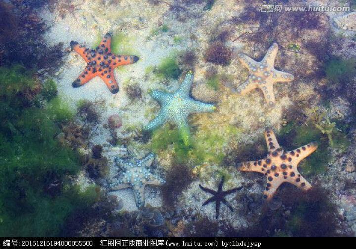迷妆 海螺贝壳 地中海风格家居合集造景摆件 鱼缸水池装饰品 花色贝壳 一口价3片 晒单图