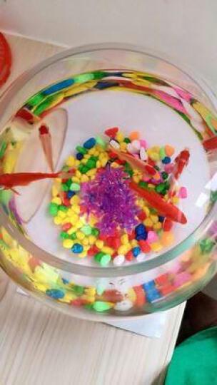 白领公社  小鱼缸 创意水族箱生态圆形玻璃桌面乌龟金鱼缸迷你小型桌面造景水培花瓶 小号 裸缸 晒单图
