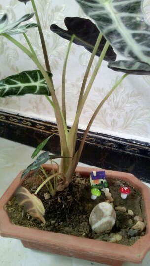 小蘑菇多肉微景观盆栽盆景摆件配件饰品 露脚猫头鹰/1个颜色随机/高3厘米 晒单图