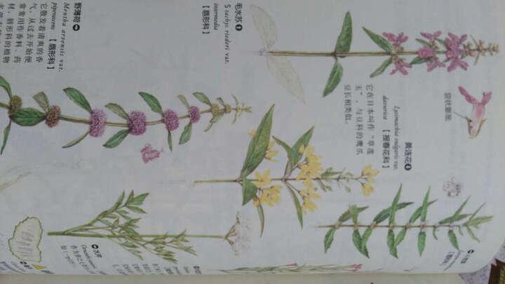 原野漫步 370种野花与88种昆虫的手绘自然笔记 晒单图