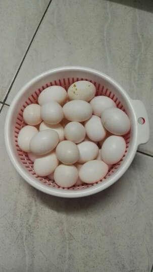 鸽子蛋 30枚装 新鲜白鸽蛋农家 散养 非鹅蛋鸡蛋鸵鸟蛋信鸽宝宝营养辅食 顺丰 DAN 30个只装 晒单图