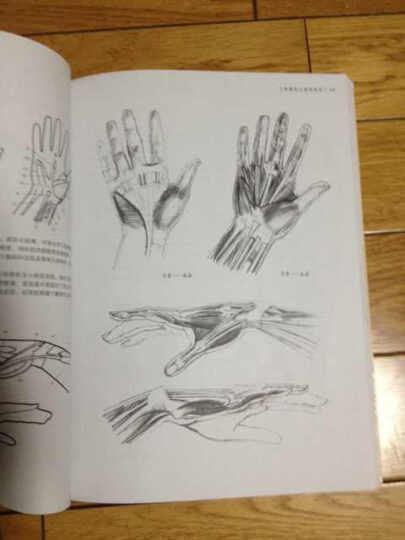 英国皇家学院艺术设计专业绘画基础教材:人体解剖与素描表现 晒单图