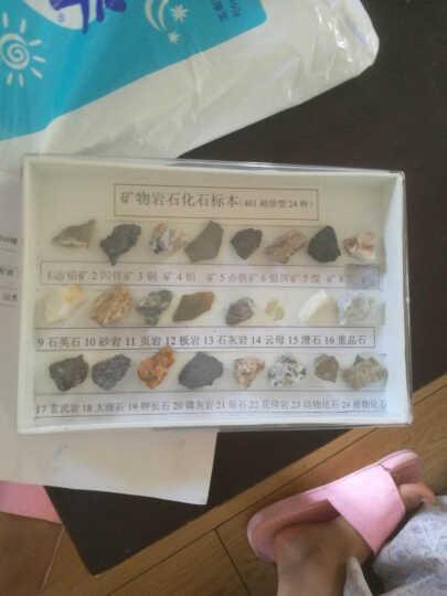 矿物岩石化石标本 24种岩石化石 小学科学配套 科普展示教学仪器 晒单图