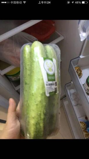 绿鲜知 旱黄瓜 地黄瓜 水果黄瓜 约600g 孕妇果蔬 新鲜蔬菜 晒单图