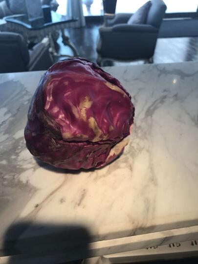 【只发江浙沪皖】紫甘蓝 1个 单重600-700g 色拉沙拉 新鲜蔬菜 晒单图
