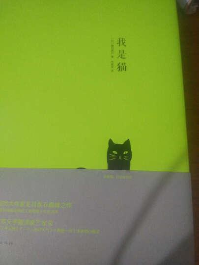 我是猫 晒单图