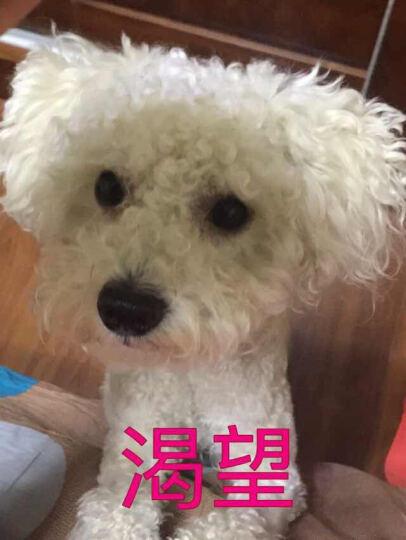 顽皮(Wanpy)自营 宠物食品 犬粮 狗粮雪纳瑞成犬理想体态配方全价粮 380g 晒单图