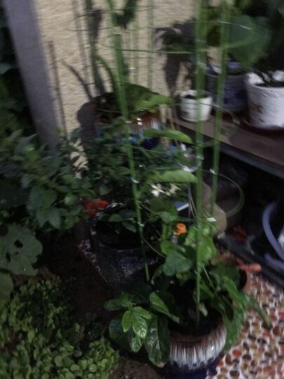 吉瑞源(JIRUIYUAN) 园艺支柱包塑钢管 番茄黄瓜豆角爬藤架花支架 爬藤支架阳台花支柱 配件-连接杆45cm 中 晒单图