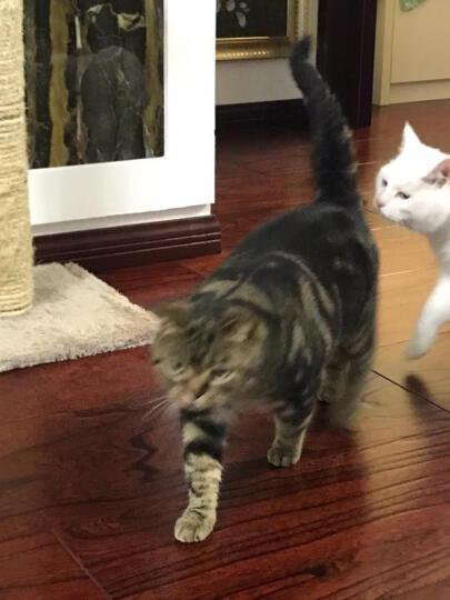 森悠(SARYOR)狗梳子 宠物去毛刷 梳毛手套猫用洗澡刷猫梳子 按摩梳刷子 狗梳子 均码 晒单图