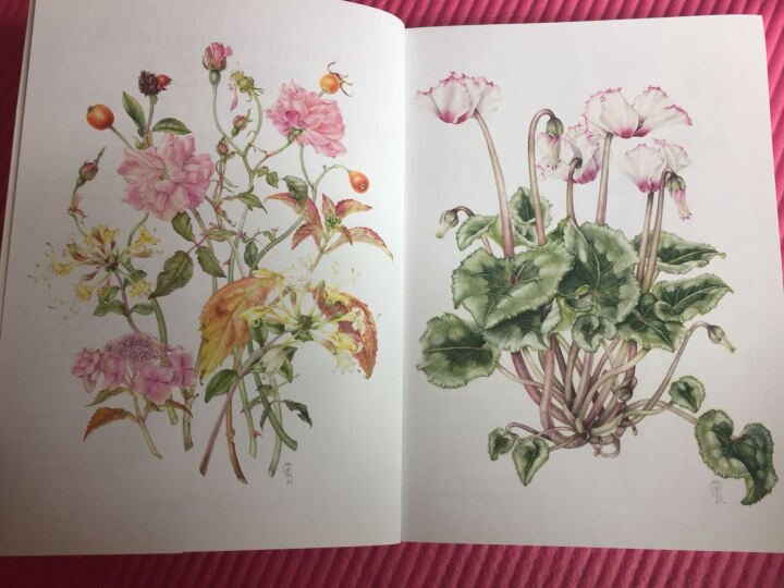 水彩植物艺术:英国艺术家水彩调色的奥秘 晒单图