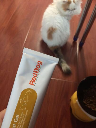 RedDog红狗鱼油美毛膏宠物犬猫狗狗卵磷脂速补营养 鱼油美毛膏 120g 晒单图