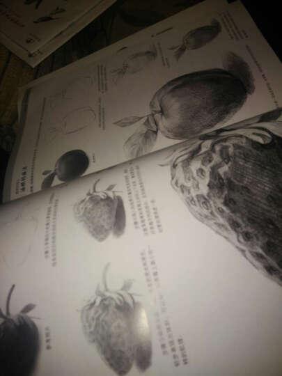 全8册 素描铅笔画 动物篇等 手绘新生从入门到精通 美术爱好者零基础技法书 艺术学生绘画画 晒单图