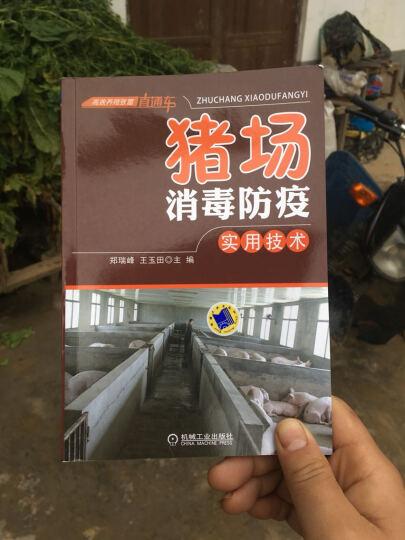 猪场消毒防疫实用技术 高效养猪与猪病防治技术大全 养猪书籍 晒单图