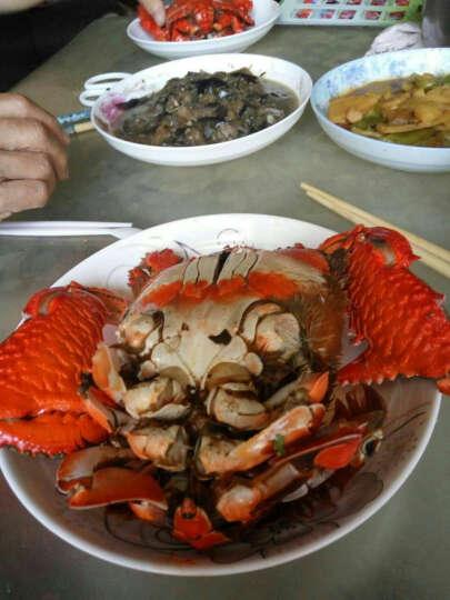 海鲜颂 冷冻老虎蟹 螃蟹 青蟹 海鲜水产 2只装 晒单图