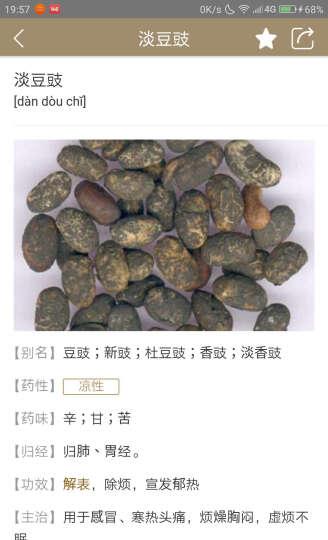 花仙子 盆景草 绿色 花卉种子 家庭阳台/办公室盆栽 100粒/袋 晒单图
