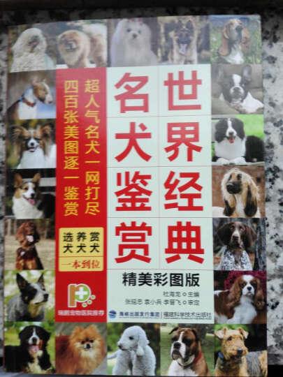 世界经典名犬鉴赏 晒单图