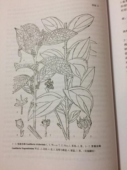 中国植物志(第57卷)(第3分册):杜鹃花科 晒单图