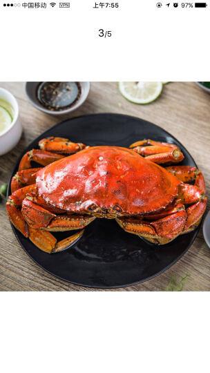 鲜动生活 爱尔兰冻面包蟹2只 400-600g/只 袋装黄金蟹 晒单图