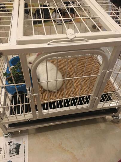狗笼猫笼中型犬大型犬狗笼子宠物狗狗笼子狗屋金毛萨摩哈士奇泰迪阿拉斯 蓝色 XS-小猫兔子各种幼犬茶杯犬 晒单图
