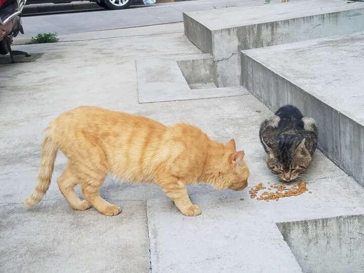 美滋元 宠物猫粮 成猫猫粮 美味三文鱼味2.5kg 晒单图