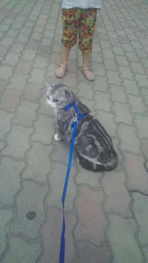 希宝 宠物猫粮猫湿粮 泰国进口猫罐头 青甘金枪鱼小银鱼及鲣鱼味75g*24整箱装 晒单图