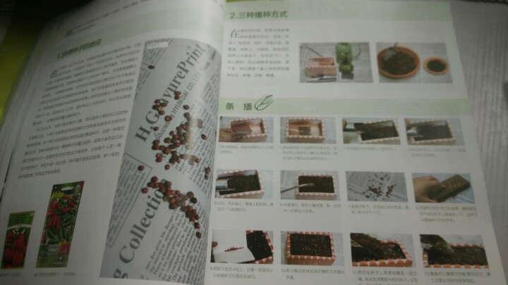 阳台蔬菜园艺:种植、美食、摄影(全彩) 晒单图