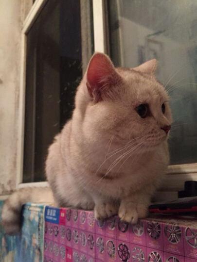 伟嘉妙鲜包 猫湿粮零食鲜封包85g【新老包装随机发货】 成猫鲜肝味 整盒12包 晒单图