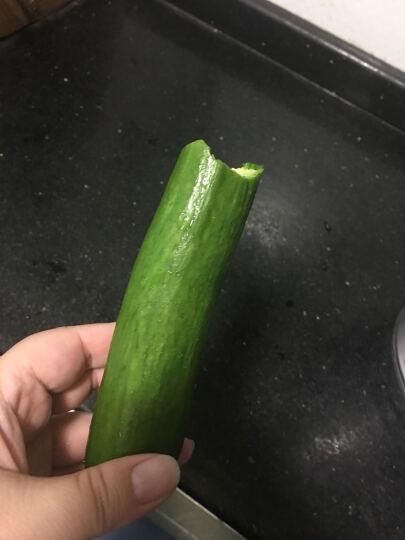 孙桥 水果黄瓜 约300g 新鲜蔬菜 晒单图