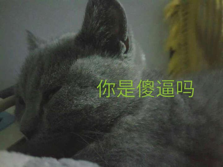 锦和宠物 巅峰 新西兰进口猫罐头 猫咪零食毛罐头主食猫粮 马鲛鱼羊肉 85g 晒单图