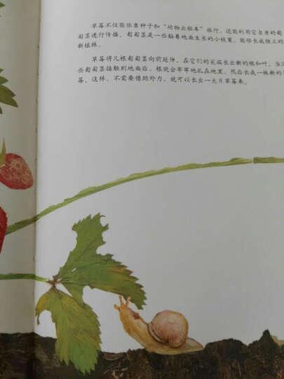 爱心树 一粒种子的旅行  德国青少年文学科普绘本 入选中国小学生基础阅读书目 晒单图