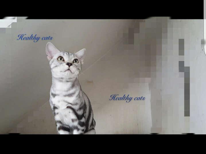 皇家(royalcanin) 皇家猫粮 K36怀孕哺乳期母猫及12月以下幼猫粮 宠物猫粮 0.4kg 晒单图