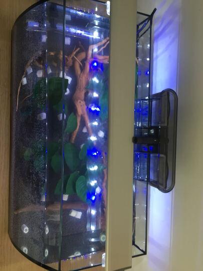 喜高 创意小鱼缸桌面鱼缸生态鱼缸高清玻璃迷你水族箱热带鱼金鱼缸懒人鱼缸 大肚子58CM黑色真水草保温 晒单图