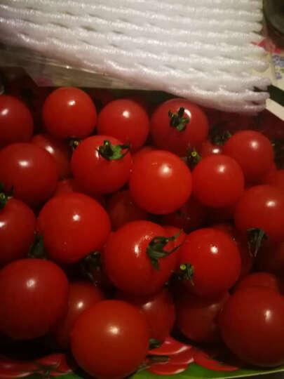 小汤山 原味番茄(红圆) 约400g 新鲜蔬菜 晒单图