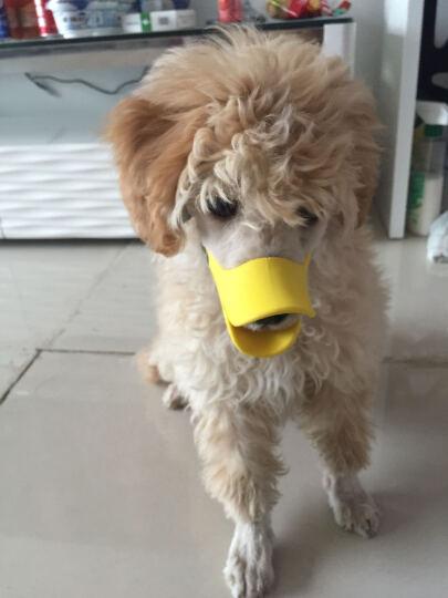 dogstory 宠物狗狗止吠器 鸭嘴套 硅胶材质 黄色 S 晒单图