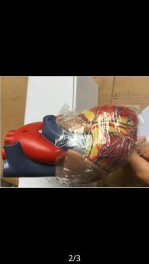 海医(Hey Model) 海医(HEY MODEL )医用人体心脏放大解剖模型 带数字 1:1自然大心脏 02709 晒单图